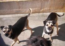 Betty y Lulu - Reservadas!!!